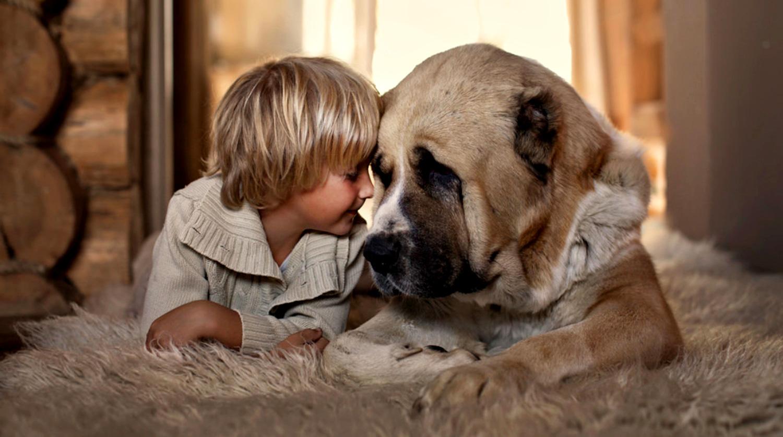 Почему родители запрещают ребёнку заводить собаку