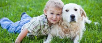 ребенок просит завести собаку